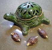 We love turtles!