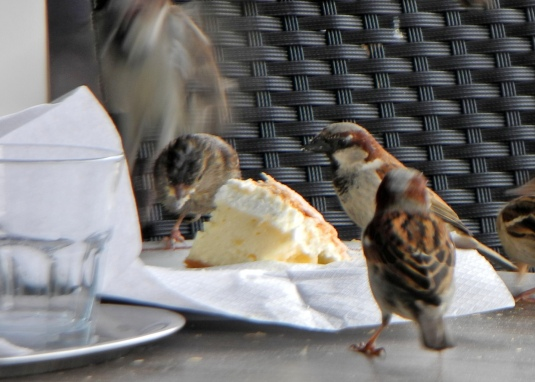 The famous Bled cream cake is a hit with the birds, too