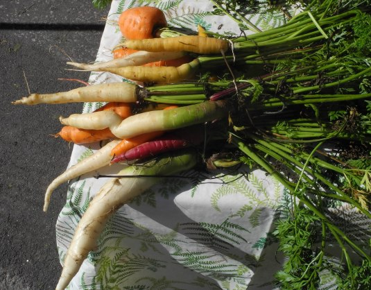 Heritage carrots... not perfect, but perfectly delicious!