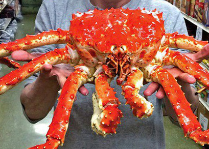 crabking_edited