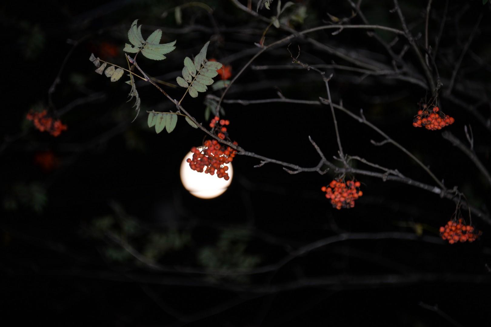 Moon at halloween